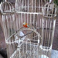 Hudba na svadbu - domáci papagáj.