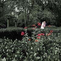 Umelecká svadobná fotografia Ruže v záhrade - kaštieľ Betliar 2013.