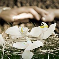 Svadobný kvet.