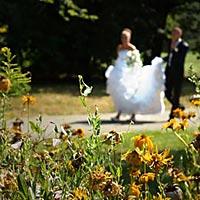 Foto svadba - prechádzka v parku.