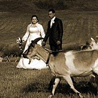 Humorné foto, svadba pod Turniaským hradom.